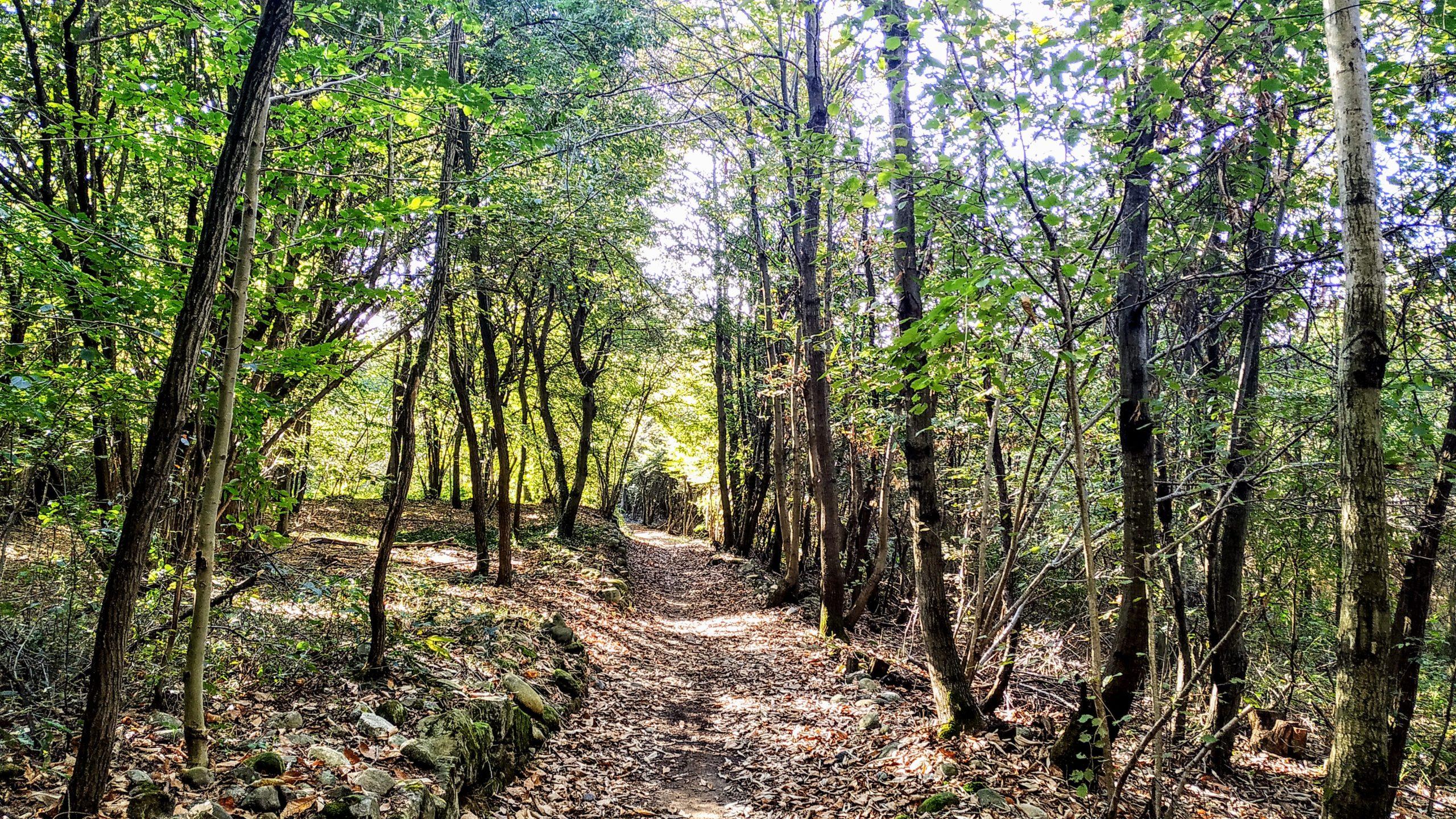 Anello Vialfrè - Foliage nella MorenaOvest AMI