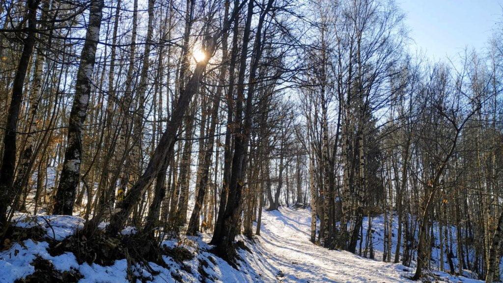 Monte Belice - Betulle