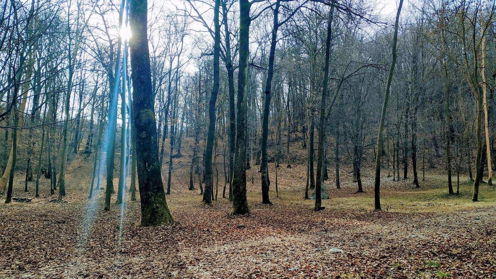 MorenaOvest Vialfrè - Escursione ad anello