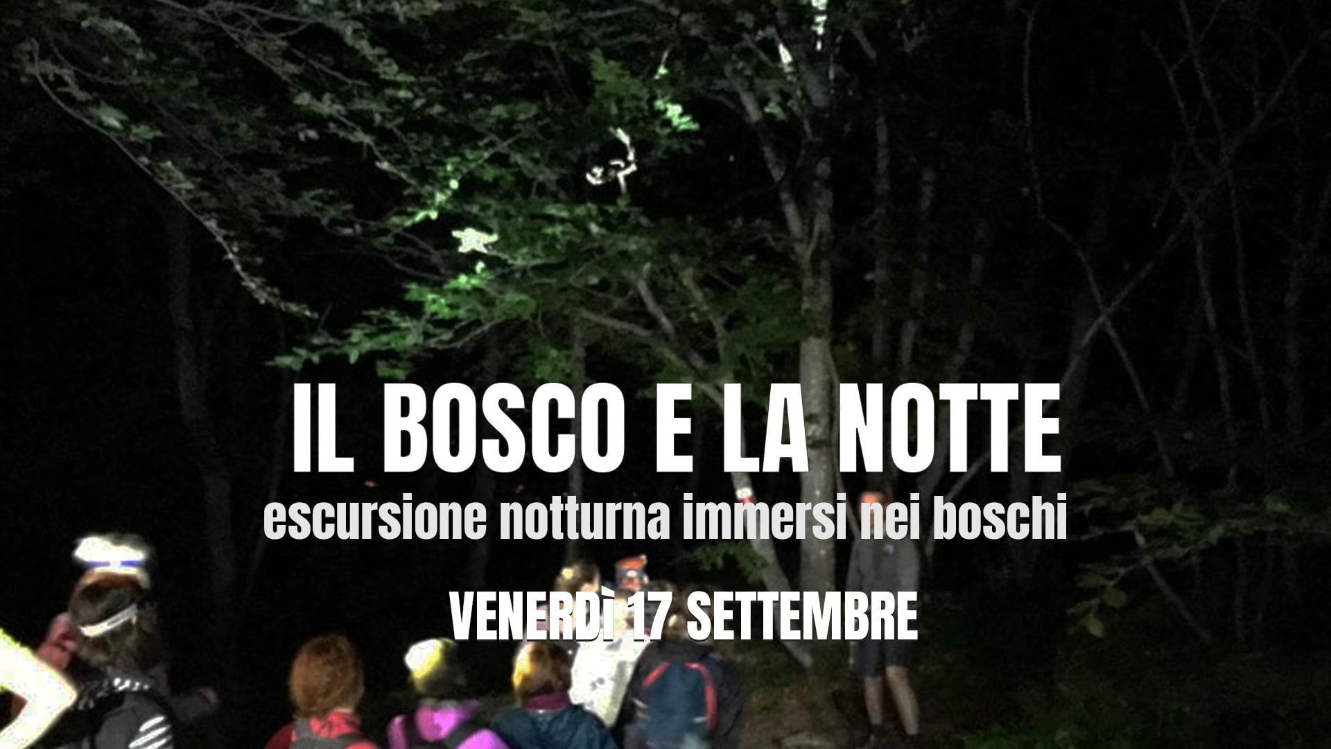 Il Bosco e la Notte